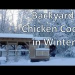 Backyard Chicken Coop in Winter